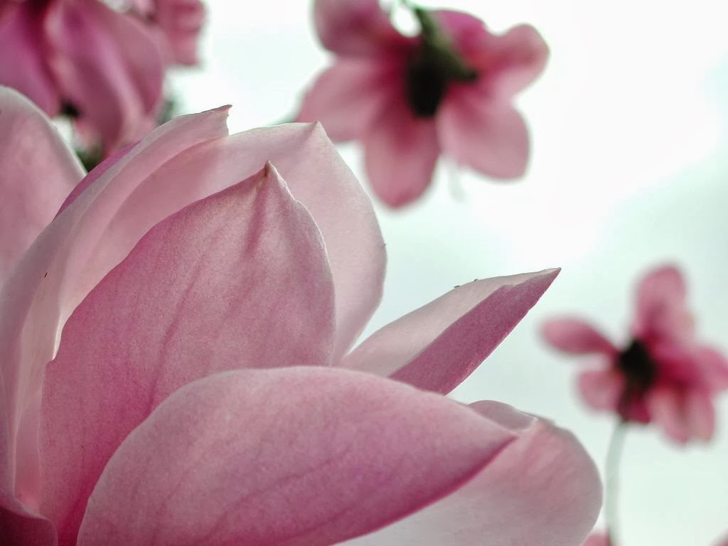 Flowers Wallpapers Download for Free