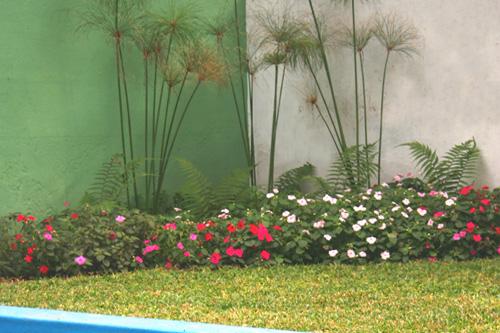Diseño de Jardines  Cuidado de Plantas  Page 3