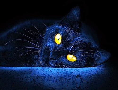 Black Cat from hell