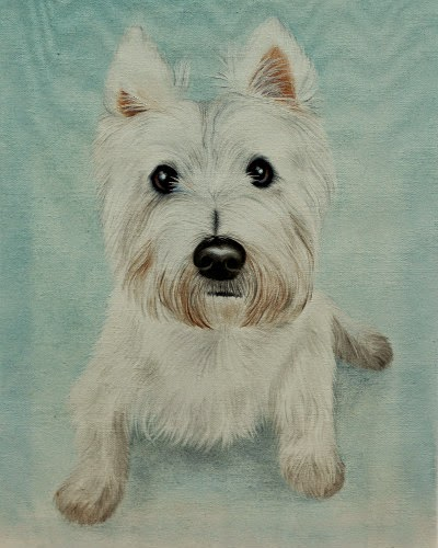 Pet Portrait Westie