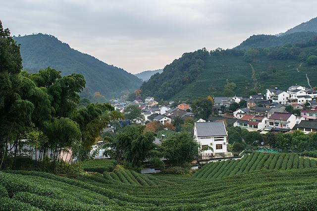 Le village de Long Jing au milieu des théiers