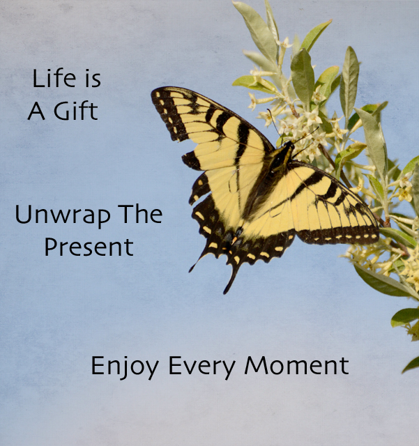 the gift of life I bear my witness that life is a gift, unfolding day by day, and, yes, it is sometimes full of sound and fury—but signifying everything at this season of gift giving and gift receiving.