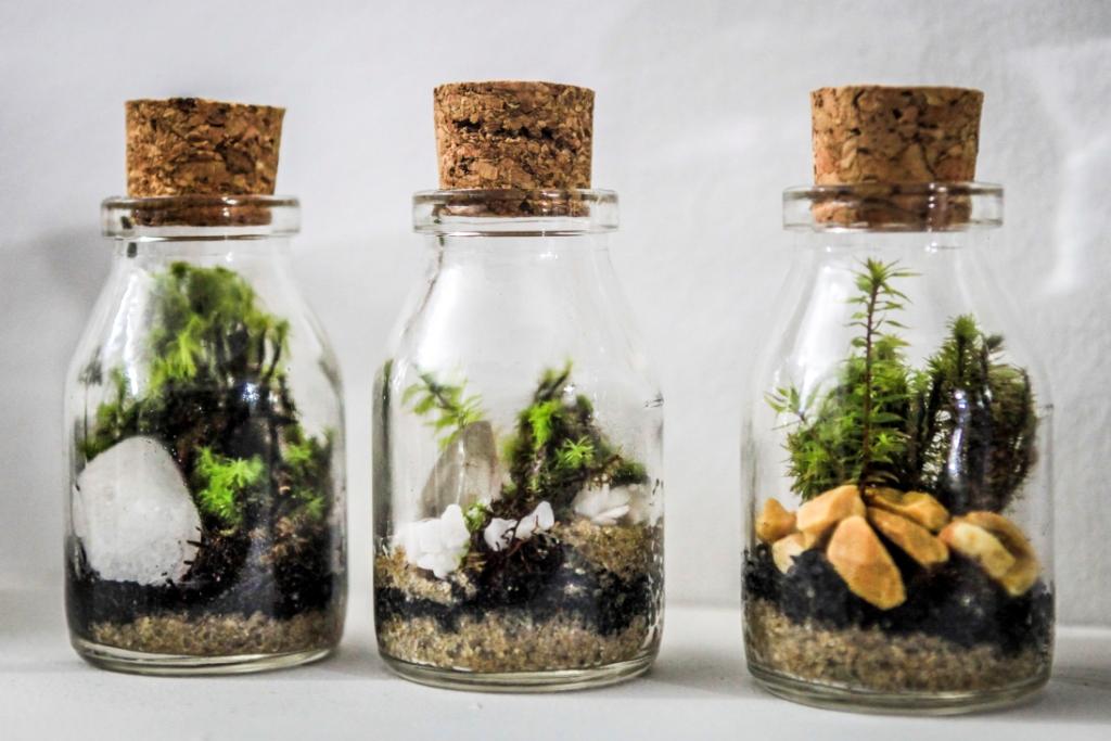 mini jardins em vidro : mini jardins em vidro:Enviar por e-mail BlogThis! Compartilhar no Twitter Compartilhar no