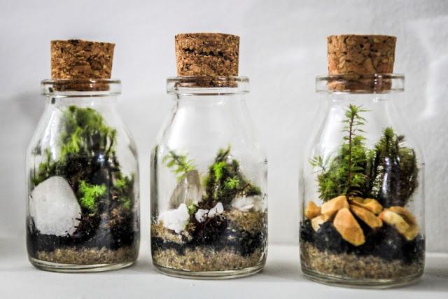 mini jardim terrario : mini jardim terrario:Enviar por e-mail BlogThis! Compartilhar no Twitter Compartilhar no