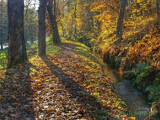 Laufen im Herbst an einem Graben im Laub