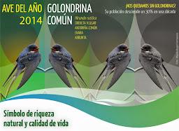 AVE DEL AÑO 2014 SEO/BirdLife
