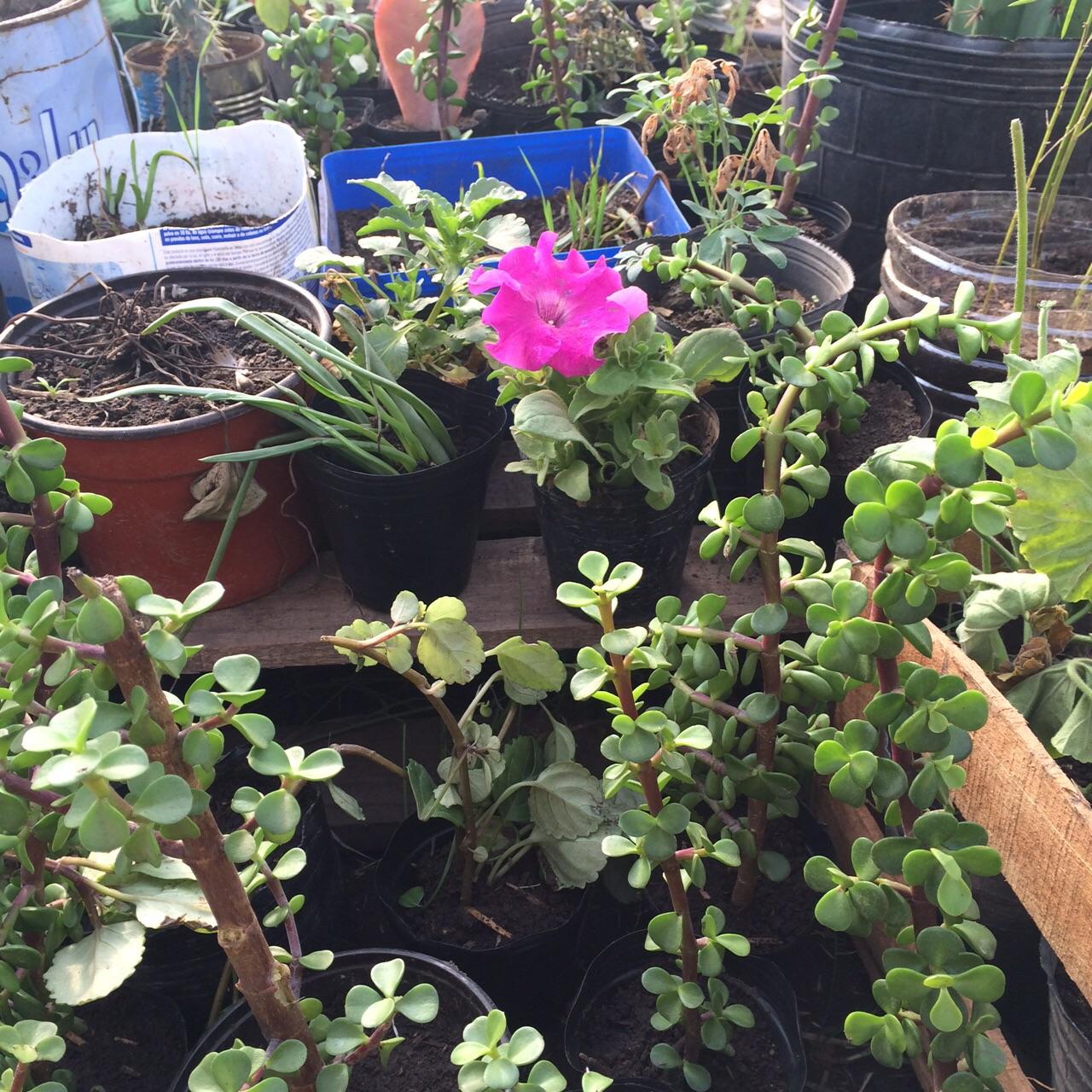 Cept n 14 magdala proyecto de jardiner a for Proyecto de jardineria