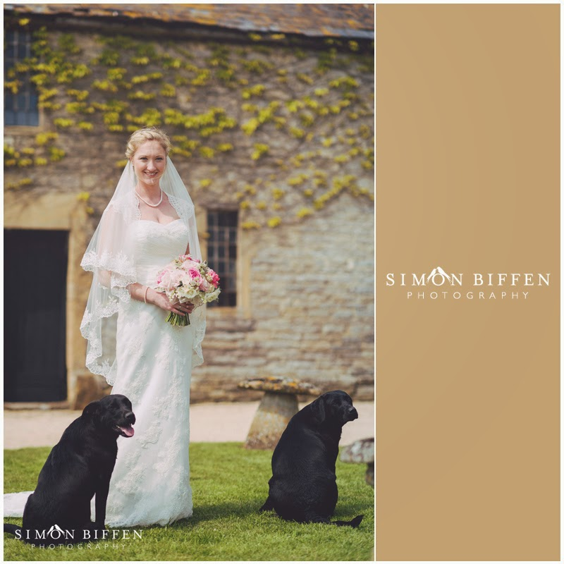 bride with her labradors somerset