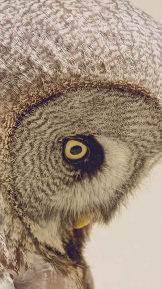 Owl Yellow Eye Profile Head Sad Look  Galaxy Note HD Wallpaper