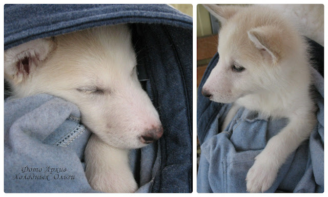 Спящий и бодрствующий