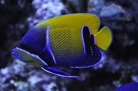 Aquarium Jenis Ikan