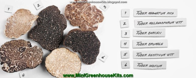 Photograph of Garden Truffle Plant Life Varieties with Botanical Designations3