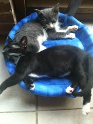 Pongo and Titan