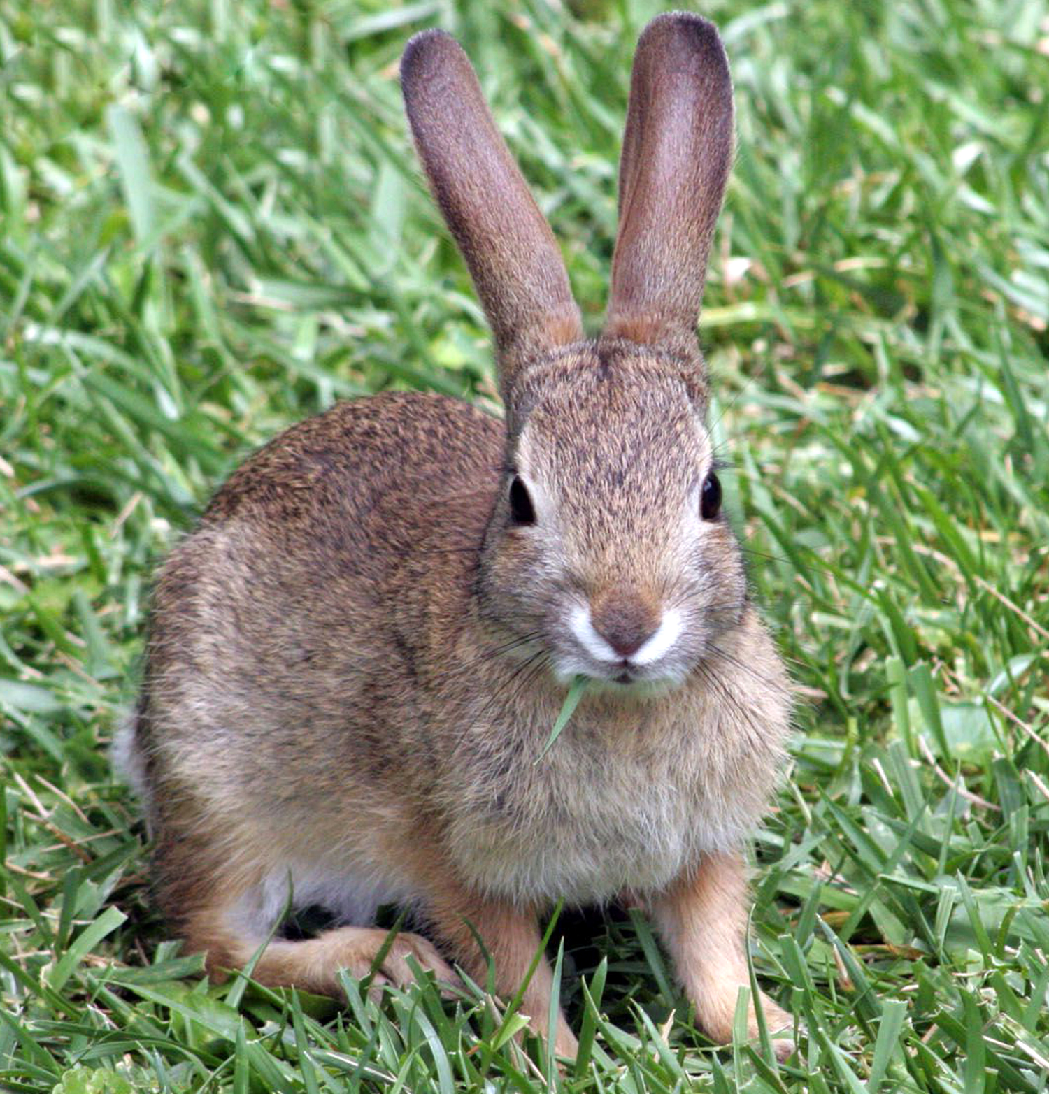 rabbit farming, commercial rabbit farming, rabbit farming business, commercial rabbit farming business, rabbit farming in India, rabbit farming business in India
