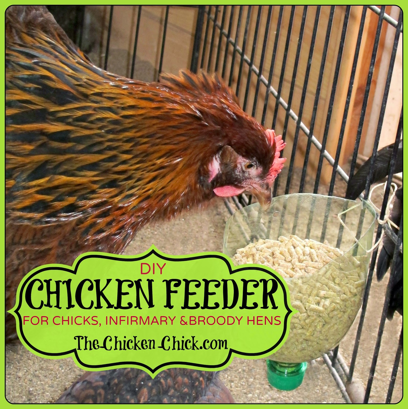 I ran out of chicken feeders recently and had an Ah-HA! moment that led me to create feeders from recycled plastic bottles. For a variety of reasons including frostbite, quarantine, feather picking injuries and brooding new baby chicks, I have had a basement full of chickens in rabbit cages, dog kennels and pet carriers for months.
