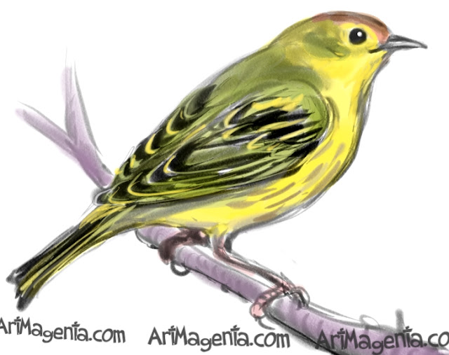Yellow Warbler sketch painting. Bird art drawing by illustrator Artmagenta