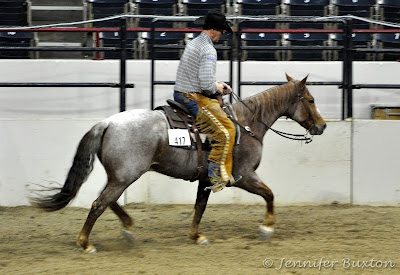 Judging the Western Pleasure Horse - University of
