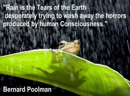 Cult Rain Regen Tranen Tears