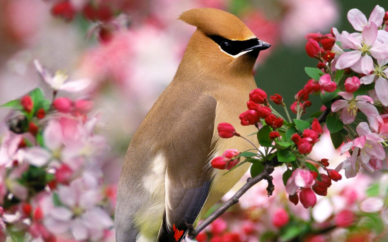 http://2.bp.blogspot.com/-HpGbsXhk4l0/T0ZzNXUNvaI/AAAAAAAAAVM/rgS0wICFRDY/s1600/Beautiful+Bird+And+Flower.jpg