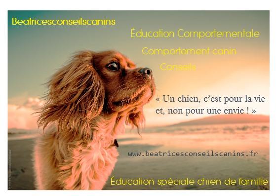 Depuis 2010 sur la Ciotat, Ceyreste, Saint Cyr sur mer...