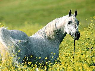 Un caballo como prestacion de una obligación genérica