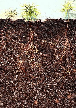 mycorrhizae and plant roots symbiotic relationship in humans