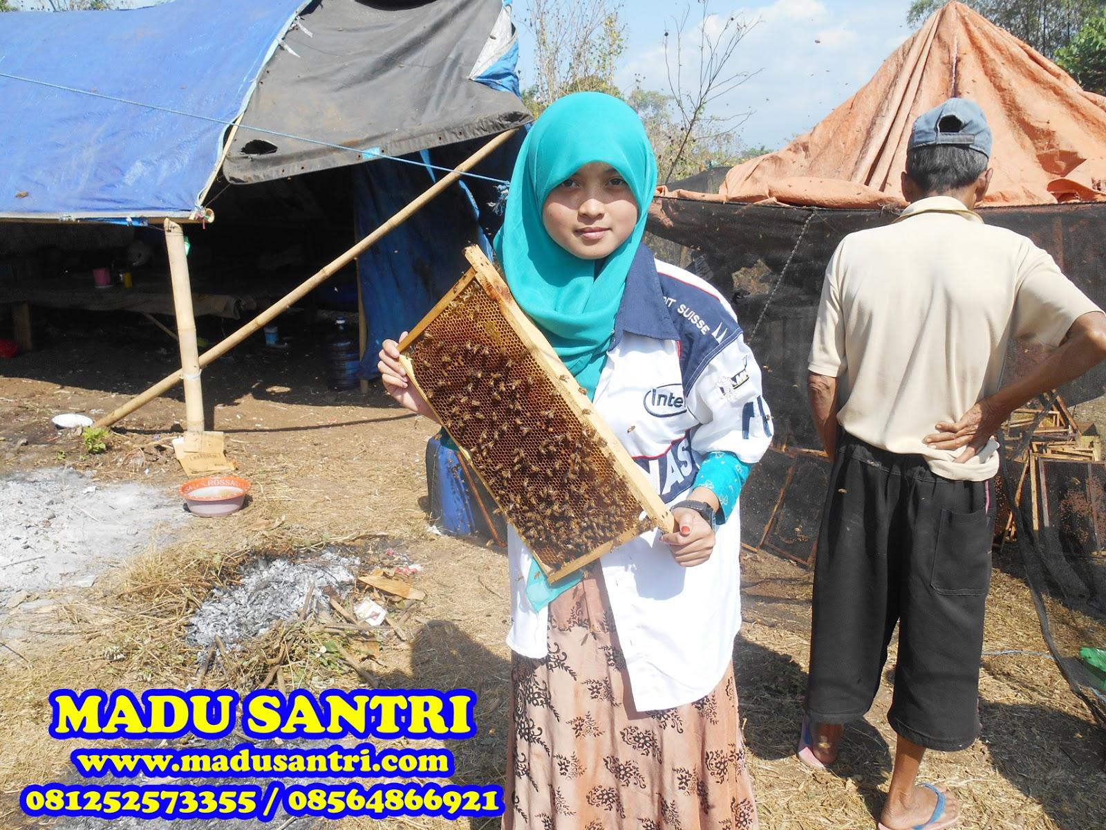 Jual Madu Asli Di Lamongan Gresik Grosir Murni Hutan Berikut Adalah Dokumentasi Panen Lokasi Budidaya Lebah Daerah Gunung Wilis Kediri Jawa Timur
