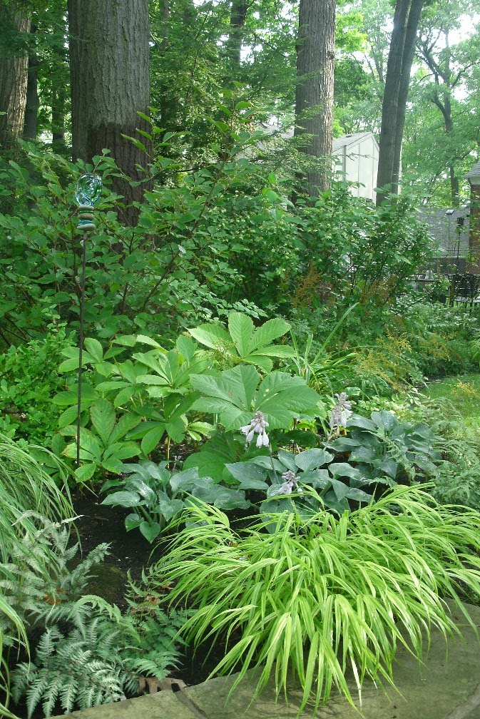 Hakone grass Halcyon hosta rodgersia in shade by garden muses-not another Toronto gardening blog