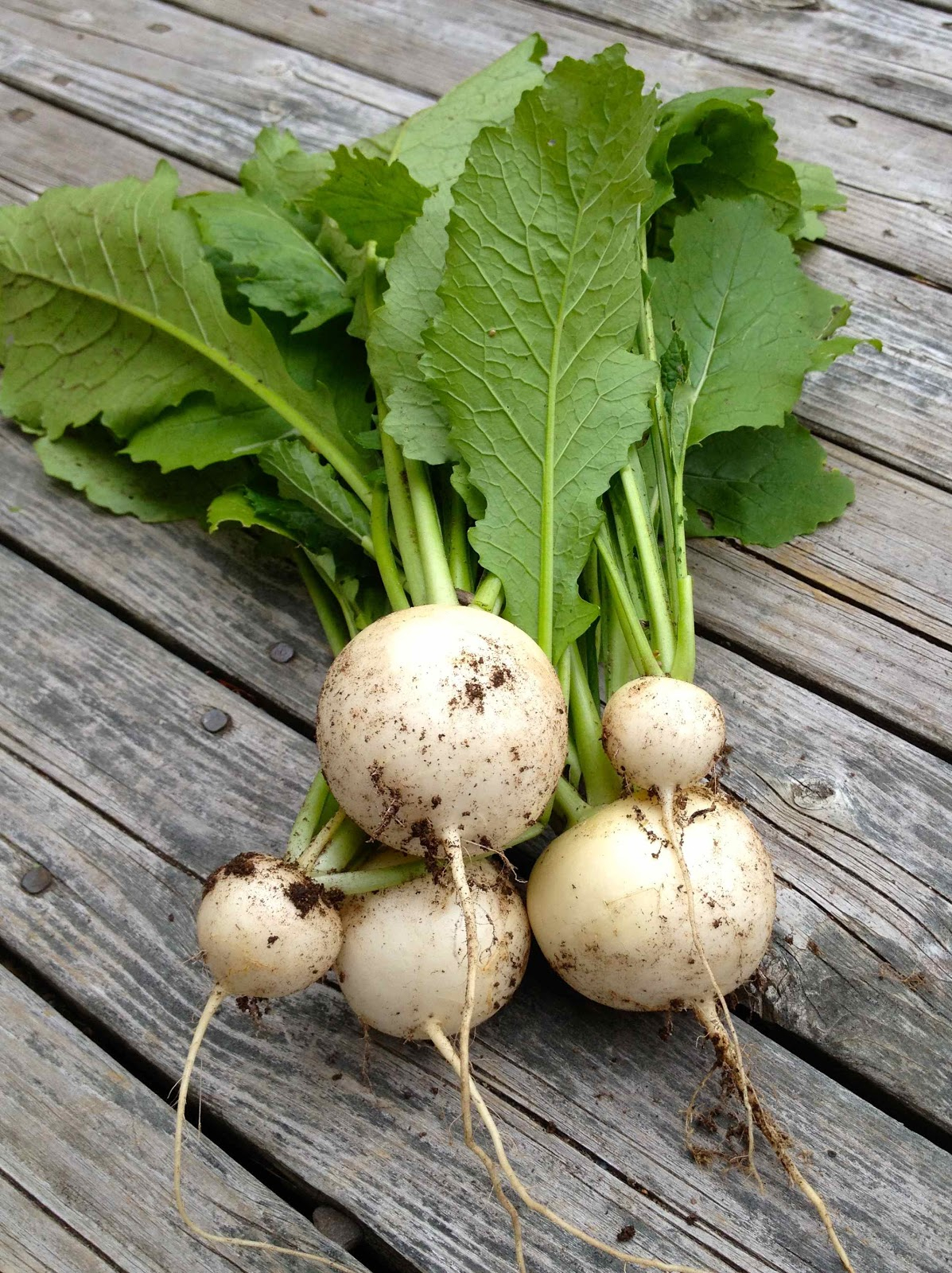 Japanese Turnips, another favourite