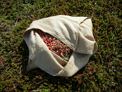 A burlap sack full of freshly gathered cranberries
