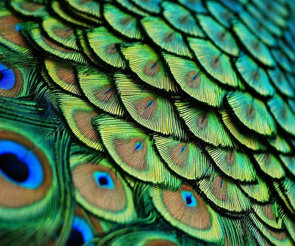 Plumas, colores y dinosaurios   Quilo de Ciencia