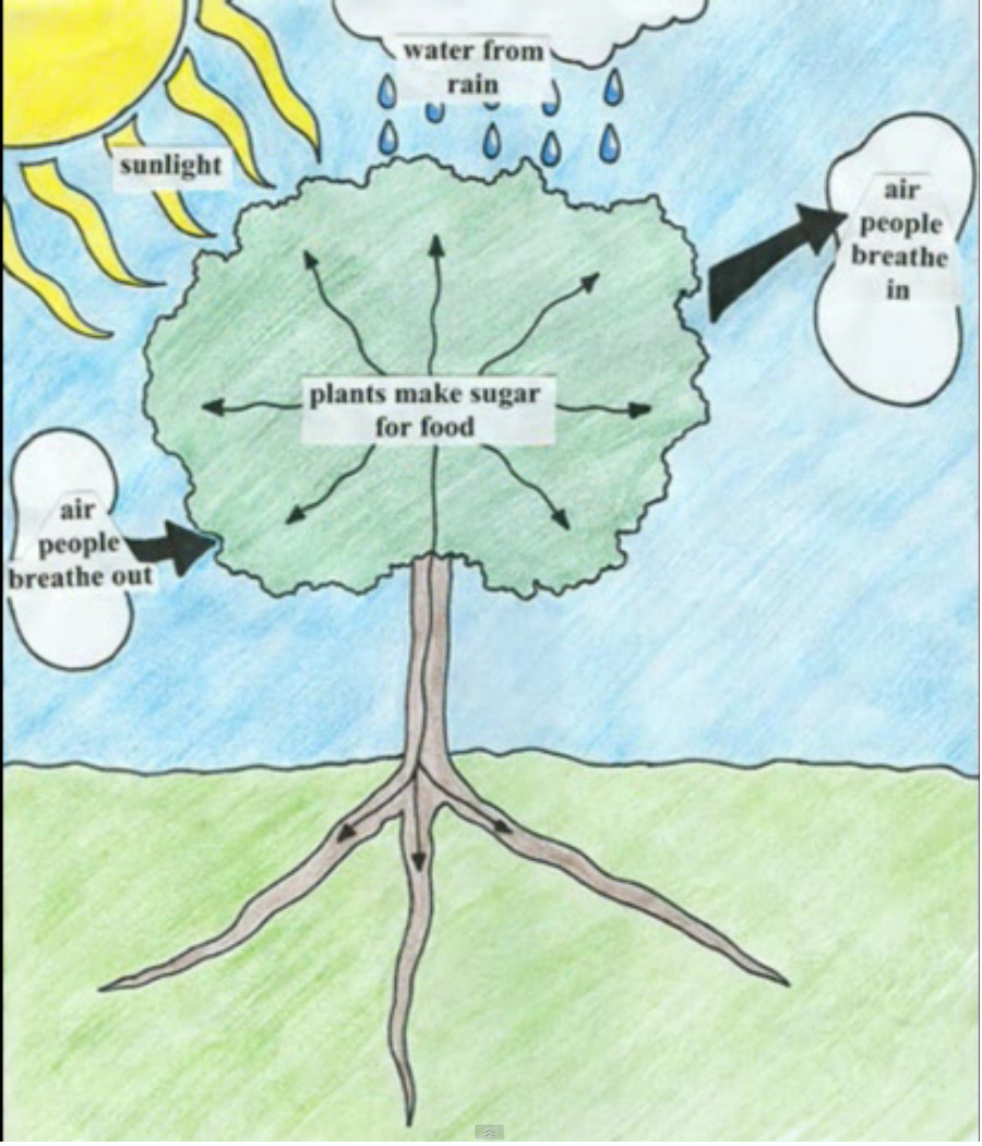 photosythesis works Overview of photosynthesis what photosynthesis accomplishes, why it's important, and how the light-dependent and light-independent reactions work together.