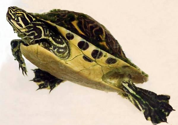 Vivencias y ocurrencias de una coccinellidae mis mascotas i for Acuario tortugas