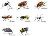 Services offered by American Pest Solutions