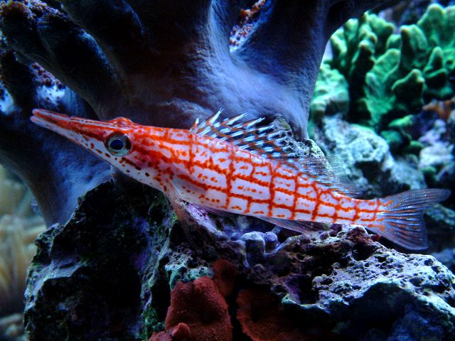Reef coral species for Easiest fish to take care of