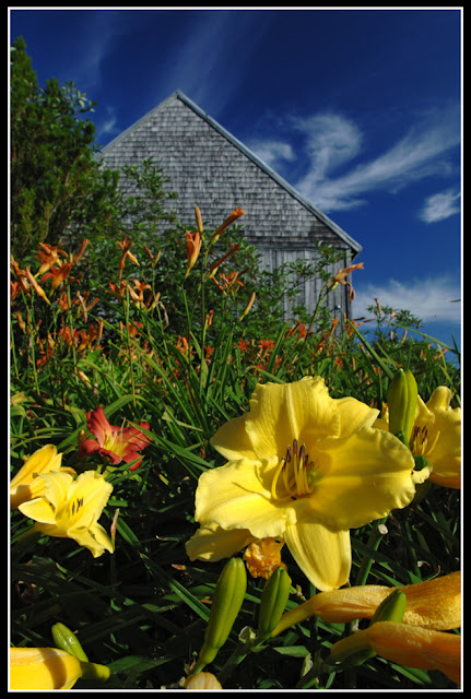 Nova Scotia; Flowers; Barn