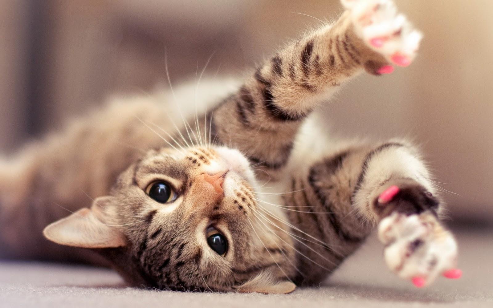 Cómo cuidar a tu gato: cuidados y nombres para tu mascota. Gato tierno