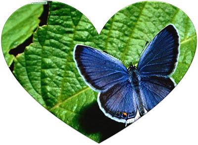39_corazon_mariposa