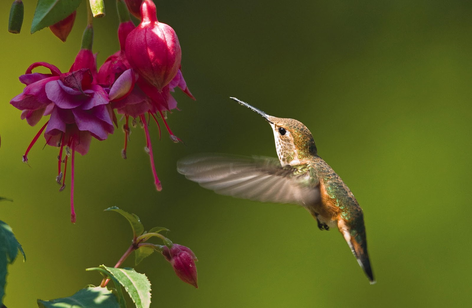 Wild Birds Unlimited: When to put up hummingbird feeders and other FAQ
