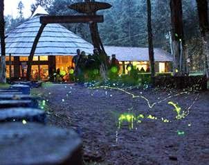 5 lugares que no imaginas existen en m xico para verano Espectaculo de luciernagas en tlaxcala