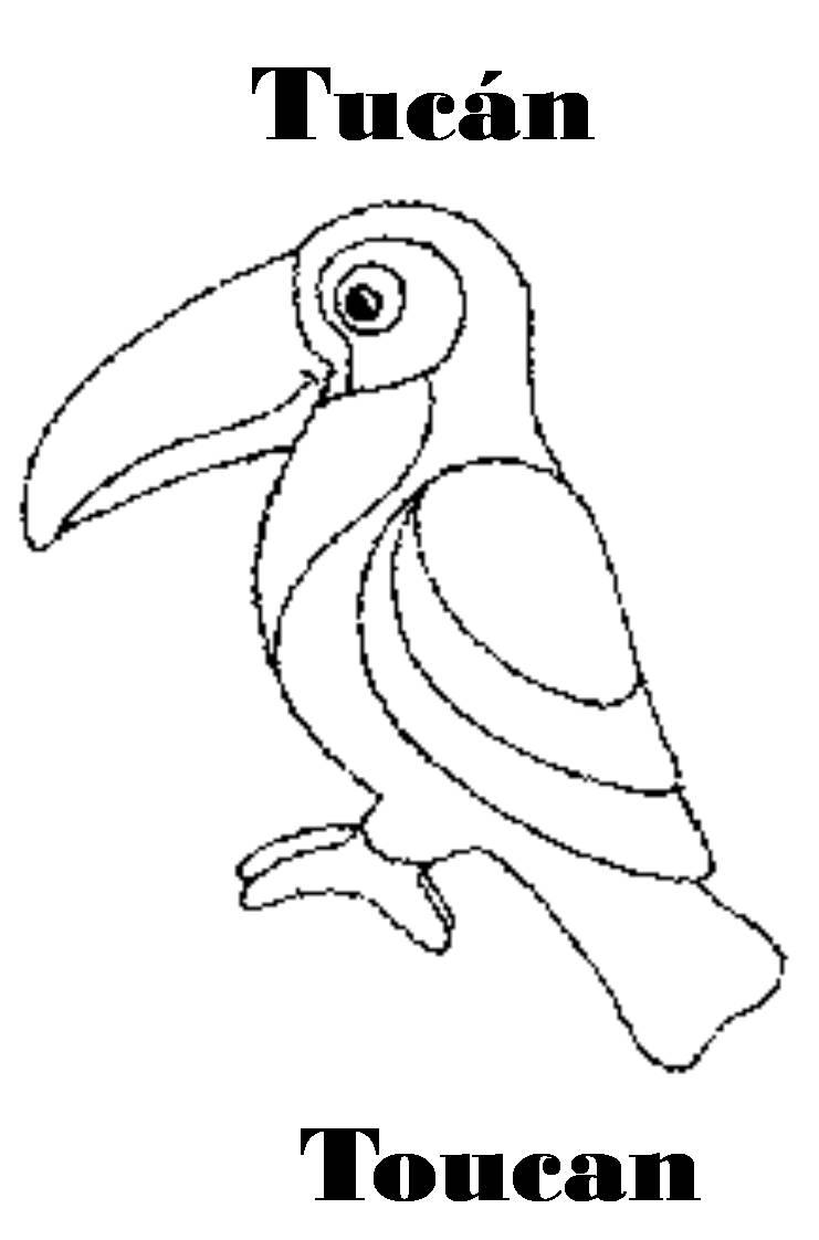 Imagenes para dibujar en Ingles y español: Animales de la Selva para ...