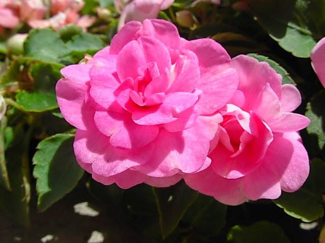 plantas y flores jardin clima