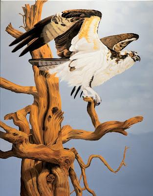 Cathy Weiss, osprey