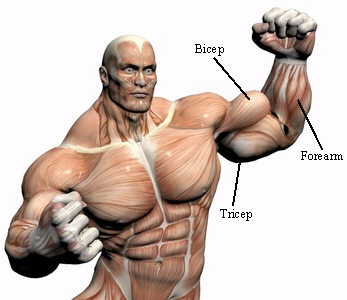 Muscle building exercise examples