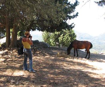 Ενα «Άλογο» στο δρόμο μας!