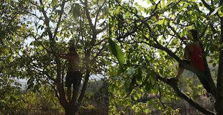 Climbing trees is fun