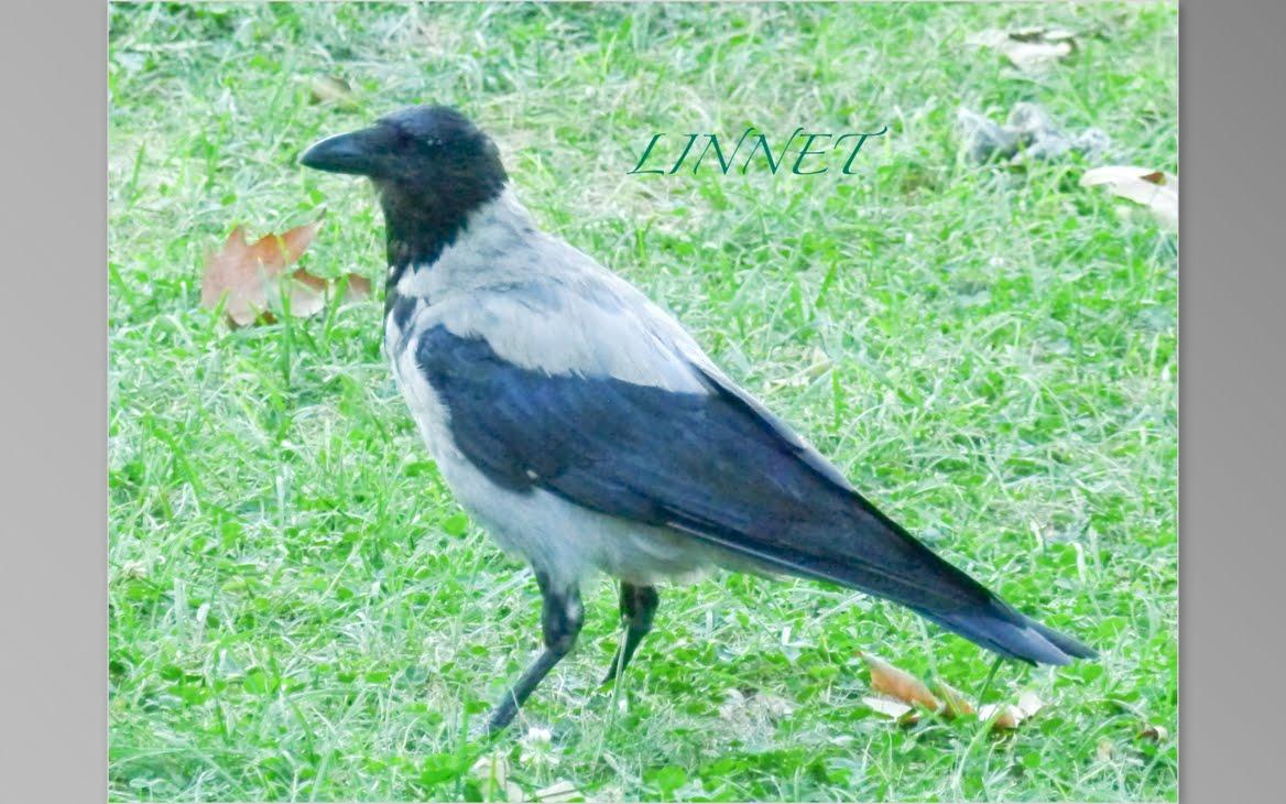 トルコで出会った野鳥(Turkish bird)