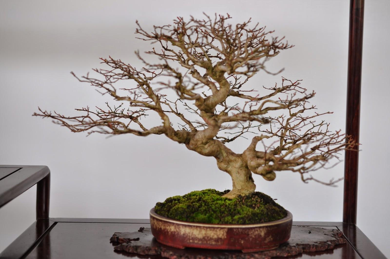 All In One Bonsai And Ceramics Taichung Bonsai Exhibition