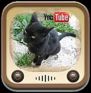 Nasz kanał wideo: