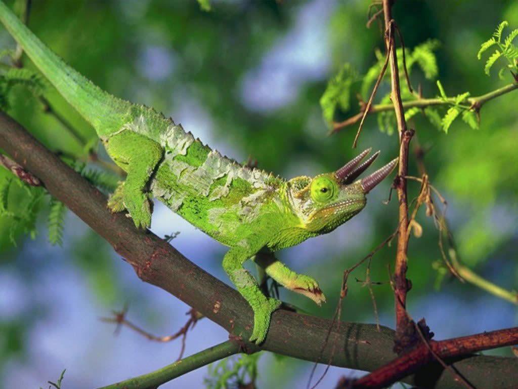 http://2.bp.blogspot.com/-HuuKWvENJmU/ThEilzbZ9AI/AAAAAAAAMdg/NW-eSeMsiVk/s1600/lizards+wallpapers+%25282%2529.jpg